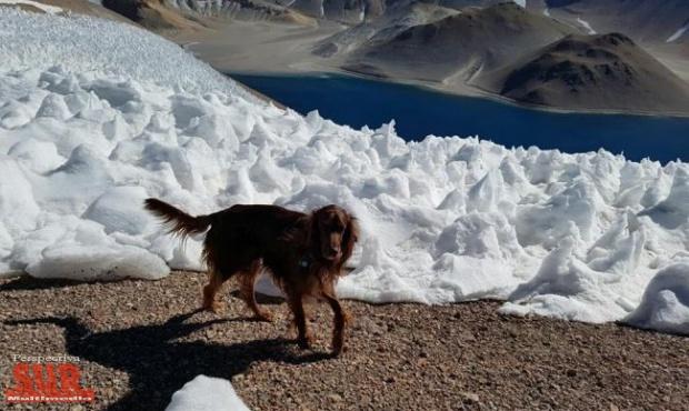 Romeo, el perro escalador que quiere entrar en el Guinness
