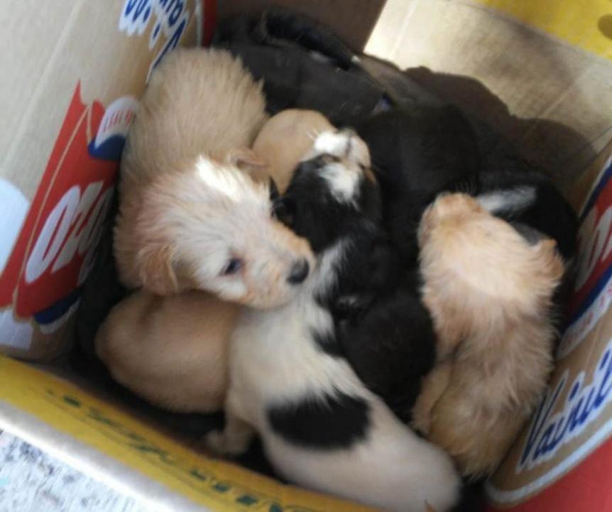 La Biblioteca Monte Chingolo solicita a los vecinos tratar a sus mascotas de manera responsable