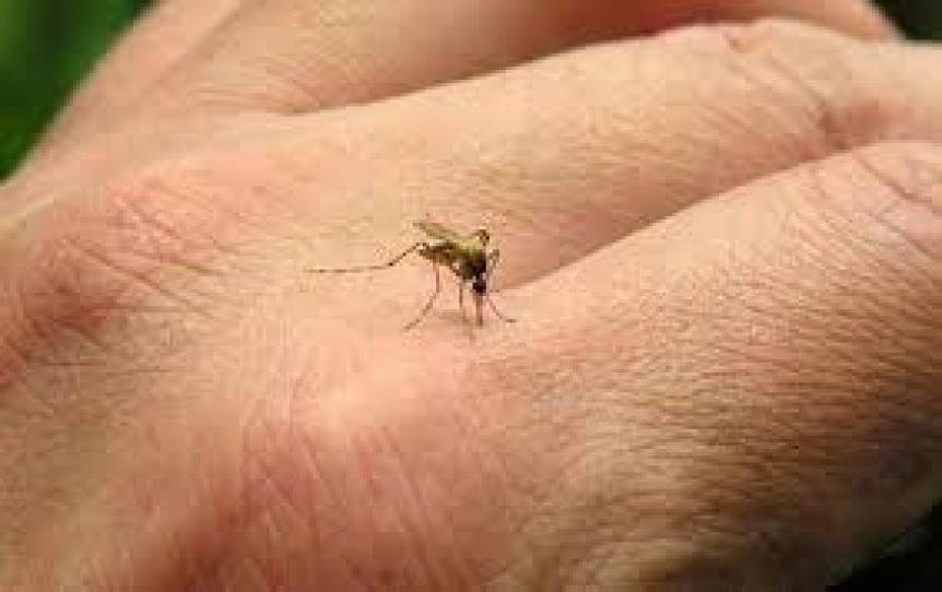Se duplicaron los casos de dengue en el hemisferio norte y llaman a comenzar la prevenci�n