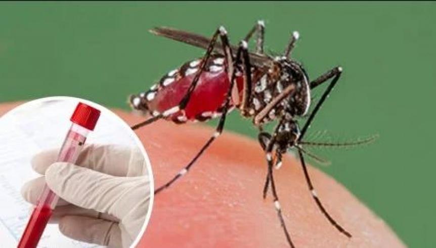 Confirman que el dengue se puede contagiar por vía sexual