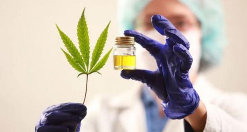 Berazategui aprob� investigar el uso del cannabis medicinal