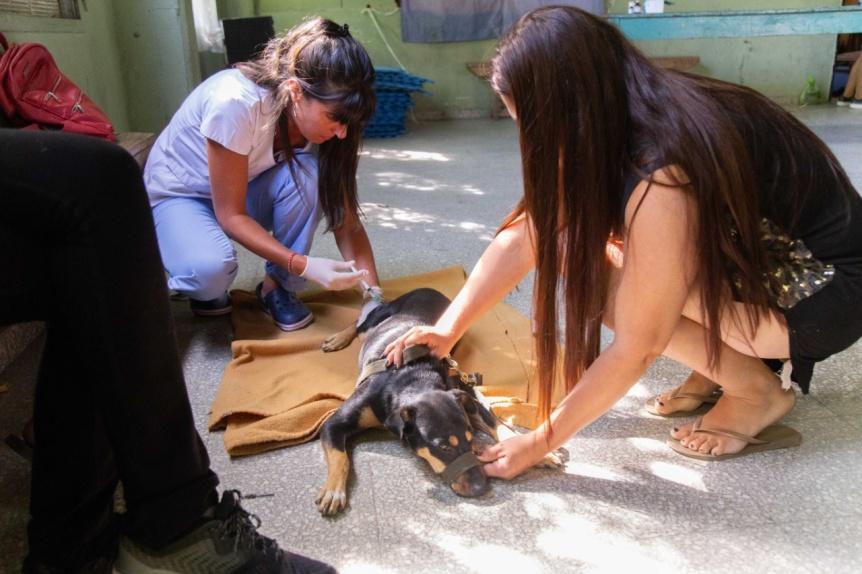 Contin�an las jornadas de castraci�n y vacunaci�n de mascotas en los barrios