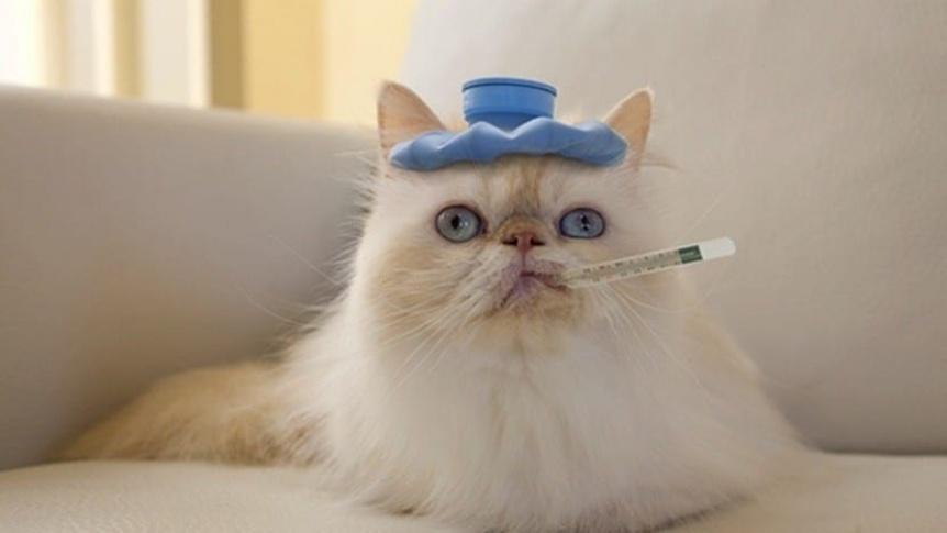 Veterinarios advirtieron cuadros graves en perros y gatos por la variante británica