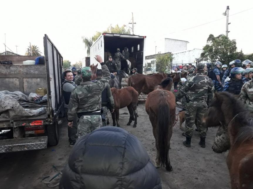 Incautaron 27 caballos en allanamientos por maltrato animal