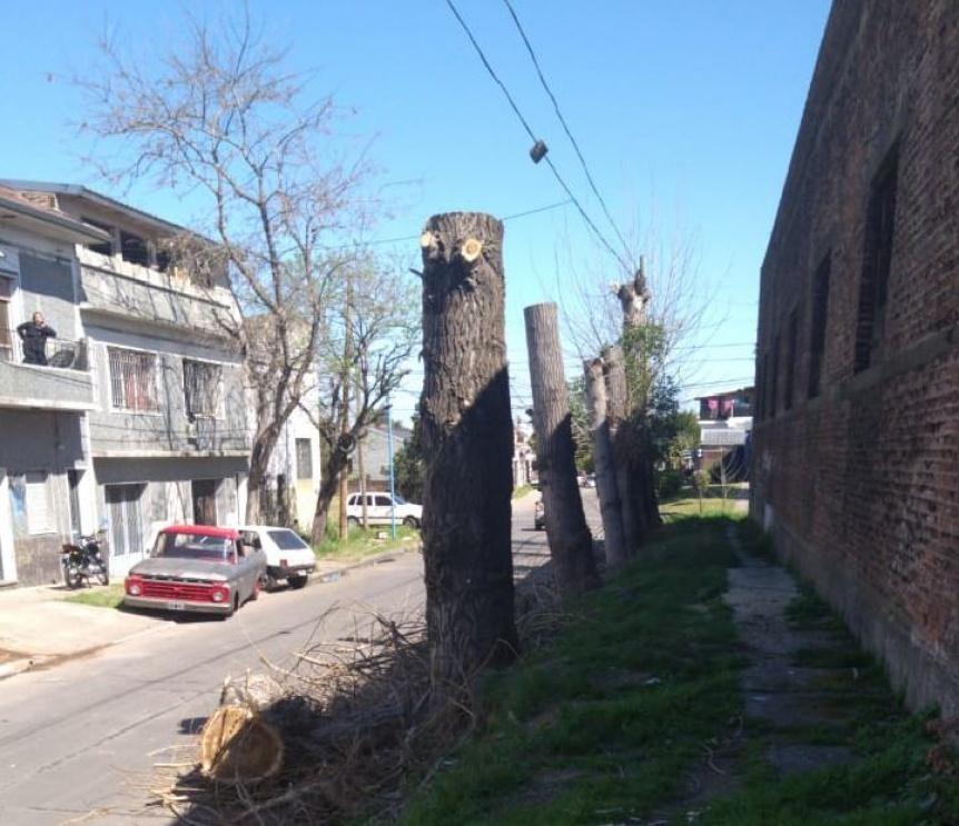 Poda indiscriminada de árboles en Quilmes Oeste